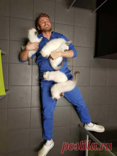 20 фотографий кошек, доказывающих, что они способны принести людям море радости и веселья
