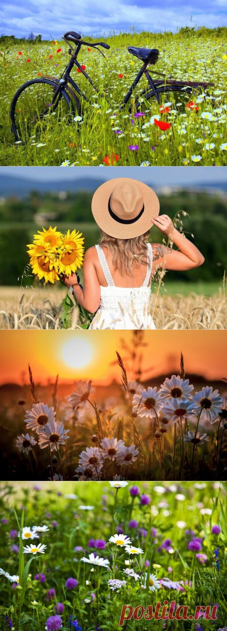 Пахнет лето скошенной травою, жарким солнцем, капелькой дождя...