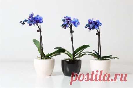Los rasgos del cuidado de la orquídea que florece en las condiciones de casa