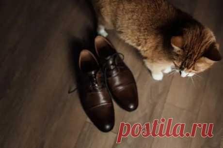 Как вывести запах кошачьей мочи из обуви - Уборка в доме - медиаплатформа МирТесен