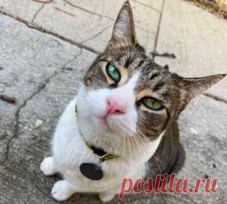 Забавные фото животных: кошка крадет у соседей мелкие предметы и приносит их хозяйке