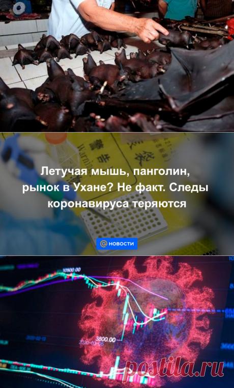 Летучая мышь, панголин, рынок в Ухане? Не факт. Следы коронавируса теряются - Новости Mail.ru