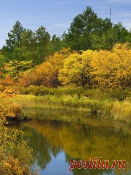 Скачать 240x320 осень, река, деревья, кусты, отражение обои, картинки мобильный телефон, смартфон