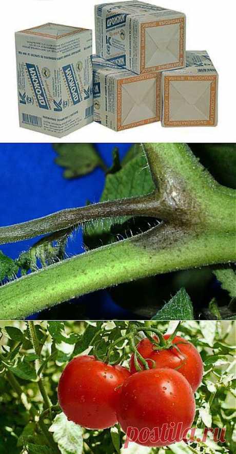 Старый метод подкормки растений и профилактика фитофторы! | ЖЕНСКИЙ МИР