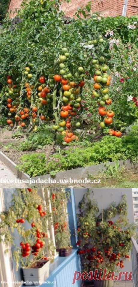 Секреты высокого урожая | Наша дача