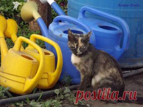 Большое хозяйство. Будни кошки-цветовода | Кошки & Коты | Яндекс Дзен  А умная и красивая кошка, вот такая, как я, может очень любить цветочки. И заботливо ухаживать за ними. Все лето. А что делать, люди ведь могут и полить забыть, и не удобрить своевременно. А я за этим слежу, чтоб всё вовремя, и всё как следует было. И цветочки росли на радость всем...