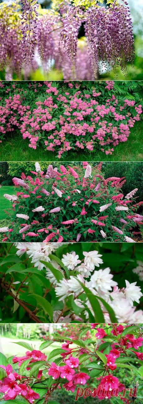 Топ-10 цветущих кустарников для сада, дачи или двора