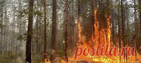 Пожары в Карелии продолжают бушевать. Руководитель республики попросил о помощи, ведь самостоятельно, без дополнительной техники и людей, региону уже не справиться.