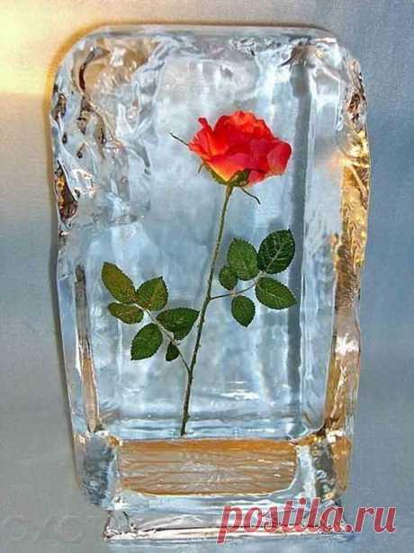Цветы во льду - романтический подарок для женщин! » Женский Мир