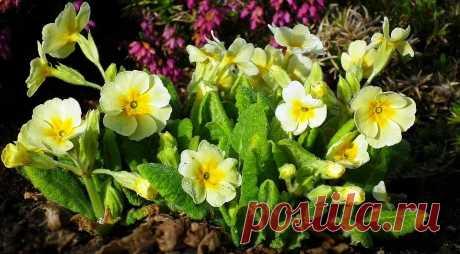 Что посадить на даче в тени: 9 растений, которые легко там вырастут Хоста, бересклет и флоксы — рассказываем о растениях, которым понравится тень на вашем участке.