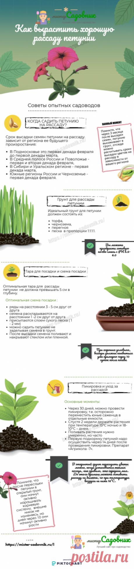 Как вырастить рассаду петунии из семян в домашних условиях ?