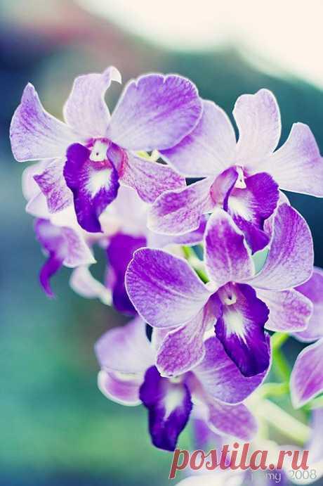 (+1) тема - Красивые фото орхидей | САД НА ПОДОКОННИКЕ