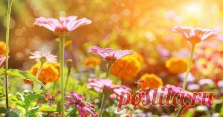 Многолетники, цветущие все лето Редкая клумба может обойтись без однолетних растений, но в большинстве случаев тон задают многолетники. При этом стоит обратить внимание на те растения, которые способны радовать цветением все лето.