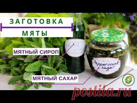 СБОР И ЗАГОТОВКА МЯТЫ//2 СУПЕР РЕЦЕПТА