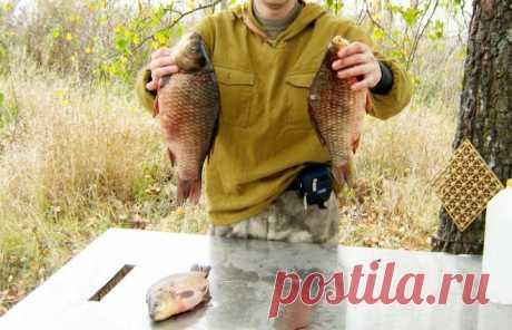 На что можно успешно ловить осеннего карася: какие насадки актуальны