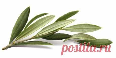 Идеальный растительный антисептик