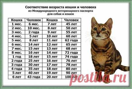 Сколько лет живут кошки: таблица продолжительности жизни
