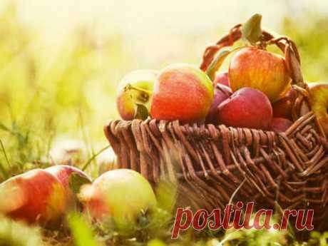 Яблочный Спас: суть иистория праздника Яблочный Спас— народный праздник, приуроченный к православному торжествуПреображения Господня. Этот день является одним иззначимых церковных праздниковиприходится настрогий Успенский пост.
