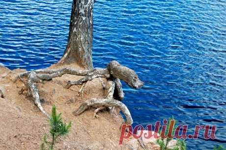 Камнеед уральский водный