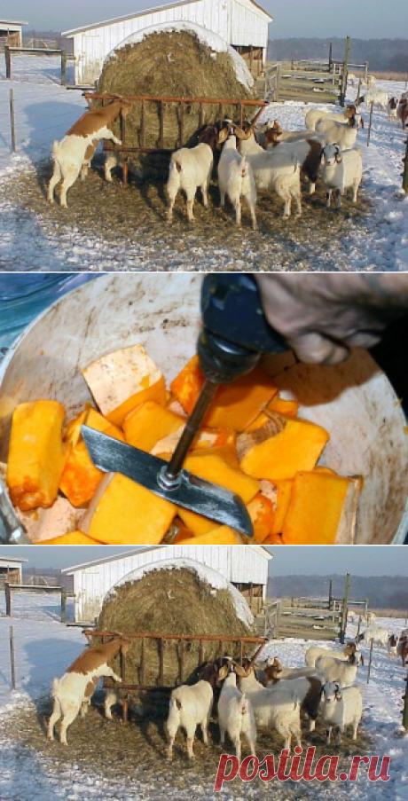 Кормление коз зимой – рацион, правильные корма дойным и сукозным