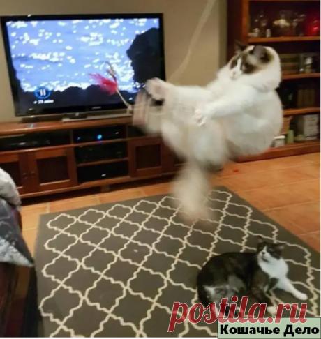 """10 уморительных фотографий котиков, которые доказывают, что с ними """"не соскучишься"""".   Кошачье Дело   Яндекс Дзен"""