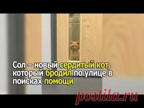 Сол – новый сердитый кот, который бродил по улице в поисках помощи - YouTube