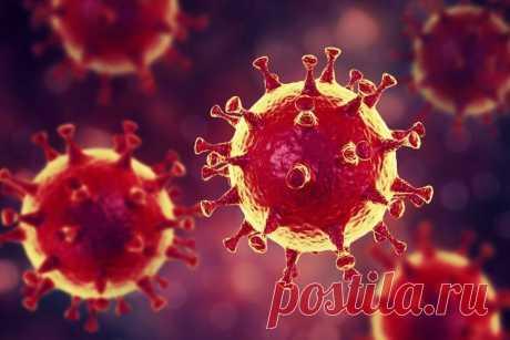 Главное - без паники. Фантастика о том, как выжить при вирусной эпидемии | ПроЧтение | Яндекс Дзен