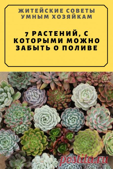 7 растений, с которыми можно забыть о поливе.Самые Удивительные! | Житейские Советы