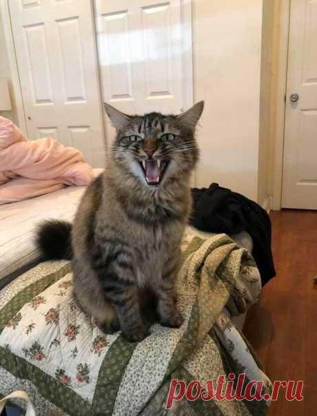 20 подленьких котов, которые снова доказали, что от них не стоит ждать ничего хорошего