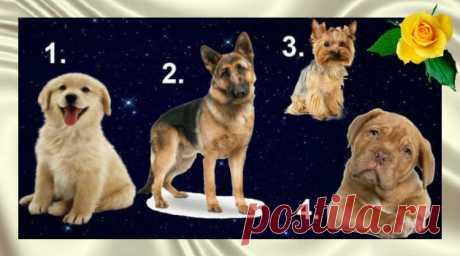 Тест: выберите собаку и узнайте, какой мужчина подойдёт именно вам — Калейдоскоп чудес