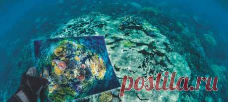 «Некогда пестрые, кораллы выглядят сегодня как серые руины, они стоят практически мертвыми – словно памятник-скелет, наследие изменения климата». Ученые исследуют механизмы выживания кораллов, чтобы понять механизм их выносливости.