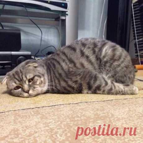 Настроение))))