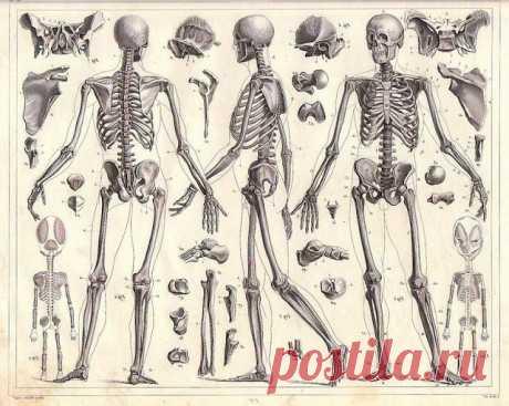 Болезни суставов — это заболевания лимфатической системы Если идут воспалительные заболевания суставов, то знайте, что в суставах нечему воспаляться.