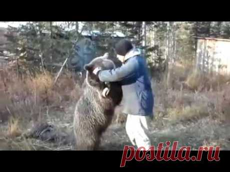 вахтовики прикормили медведя