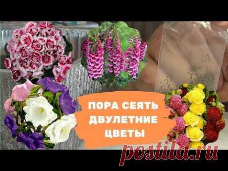 Пора сеять двулетние цветы - YouTube