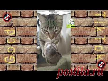 Смешные КОТЫ 😻 из Tik Tok #1 (Funny CATS from Tik Tok) / GOOD TIK TOK