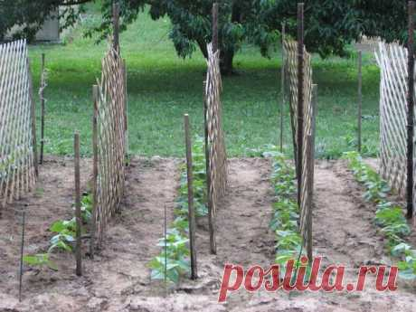 Выращивание огурцов на шпалерах: этапы, установка шпалер, уход