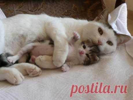 С мамой всегда тепло, уютно и надёжно