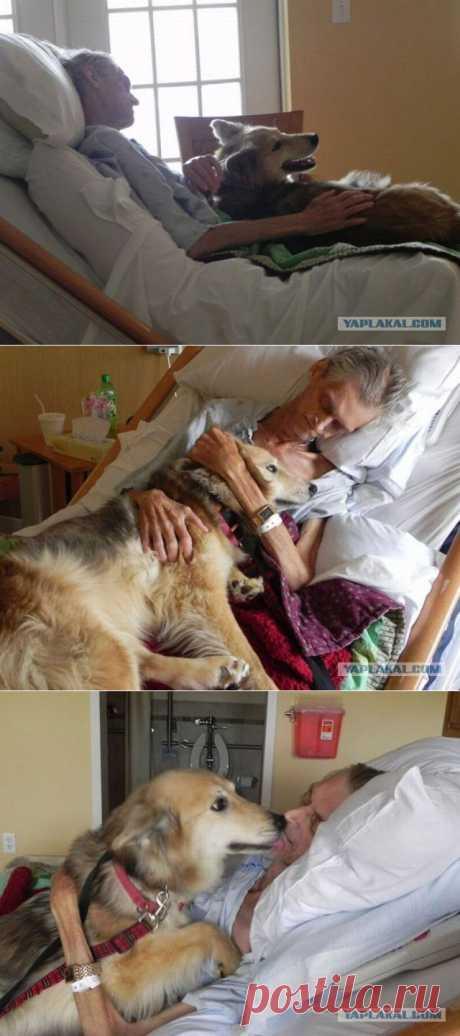 Умирающий хозяин прощается со своей собакой. Грустные, грустные фотографии