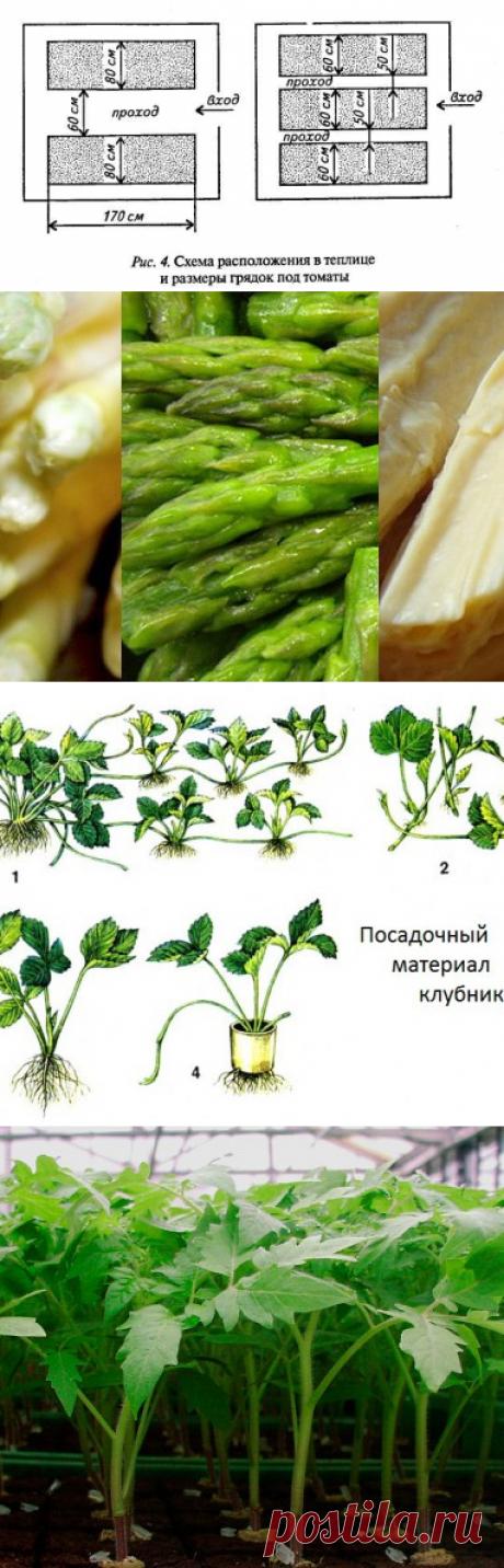 Секреты выращивания помидоров: рассада, полив и профилактика заболеваний