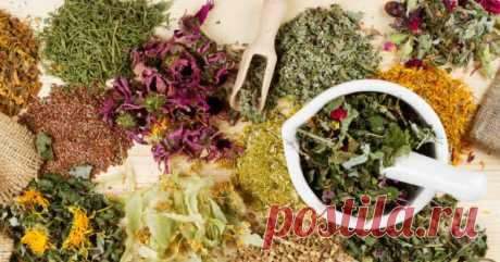 Травы для улучшения пищеварения — Сияние Жизни