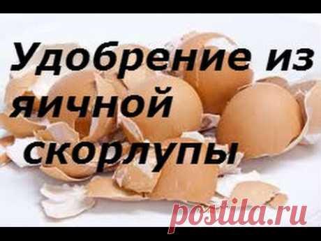 Яичная скорлупа Лучшее удобрение