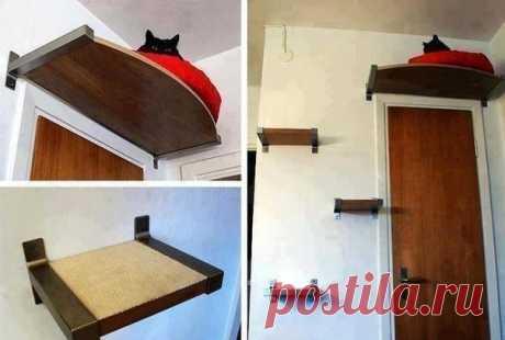Если некуда деть кота
