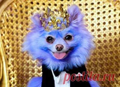 Тибетский мастиф - самая дорогая порода собак