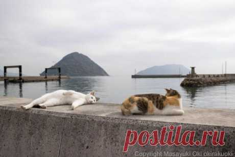 Японские уличные кошки в фотографиях Масаюки Оки