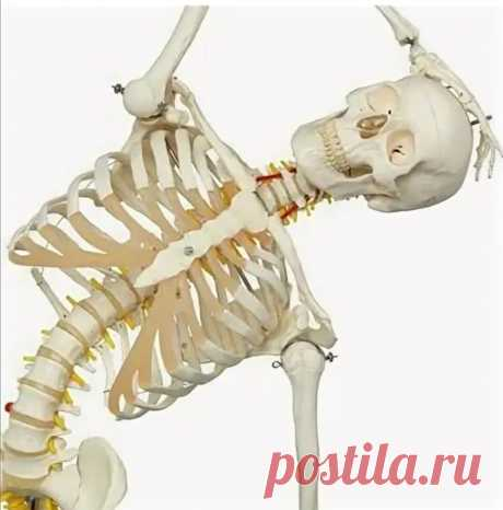 "Навигация по упражнениям канала ""Умное тело, здоровый мозг"" | Умное тело, здоровый мозг | Яндекс Дзен"