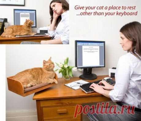 Вот это правильно :) удобно теперь котейке с хозяйкой, рядом!