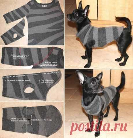 Как просто! Одежда для небольшой собачки из рукава старого свитера.