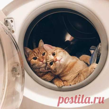 Когда в доме два кота / Питомцы