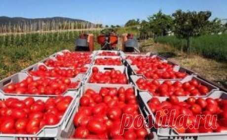 Как получить урожай, которым можно удивить всех? | Блог сайта Muza.Name